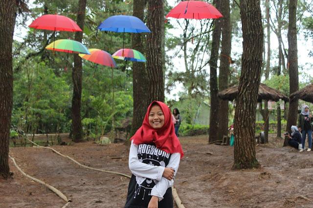 Hutan Pinusan Sumberjaya Lampung Barat