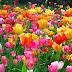 Pengertian Bunga atau Kembang