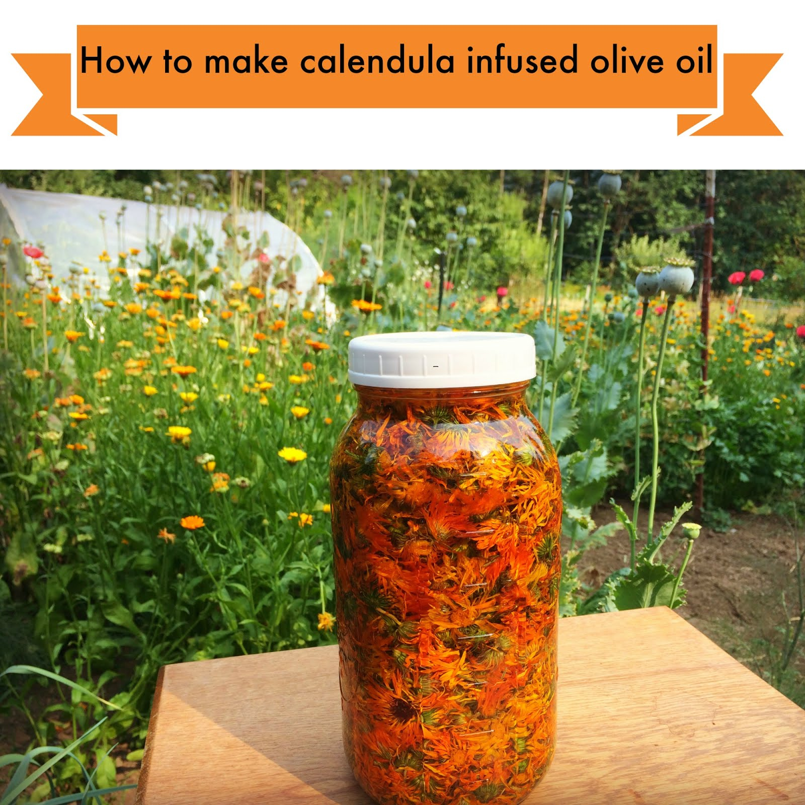 How to make calendula infused oil
