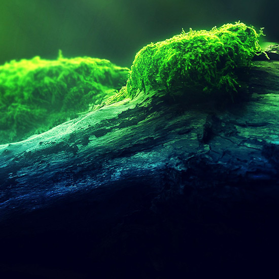 tree Wallpaper Engine
