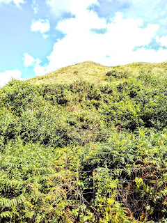 A steep hill covered in ferns, a blue sky