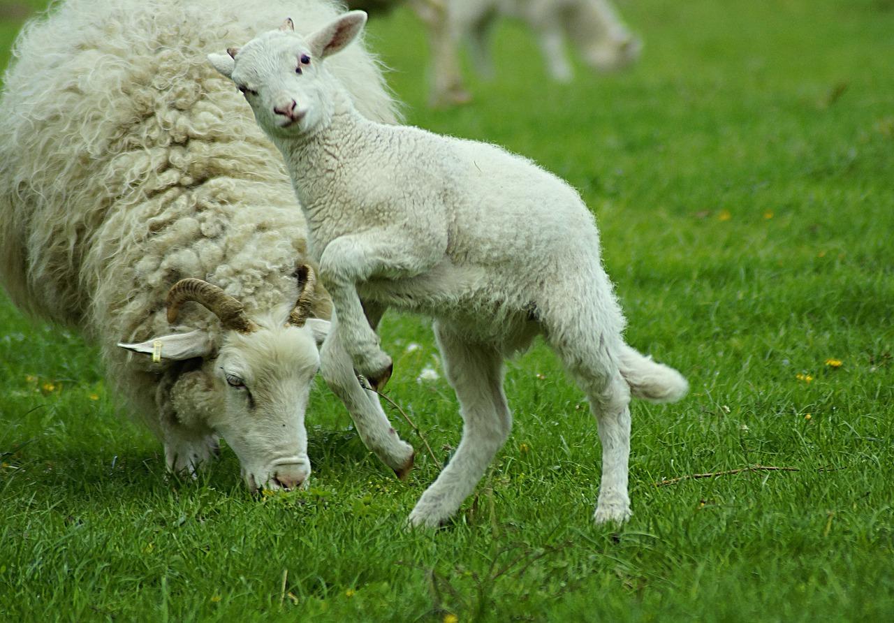 Wool Spinning Process