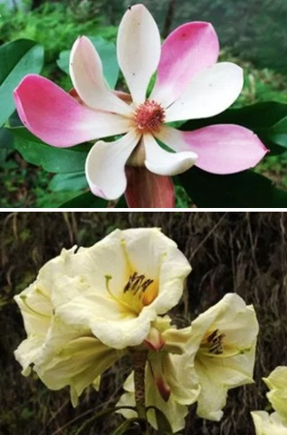 Evolution of China's flowering plants shows East-West divide between old, new lineages