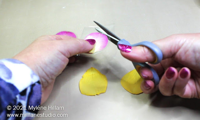 Hand holding scissors, trimming around the petal encased in clear packing tape