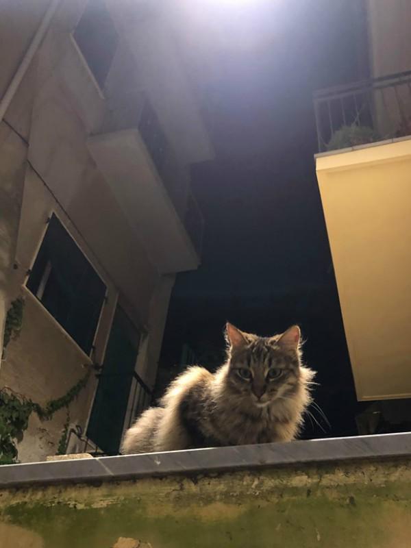 Eric cat