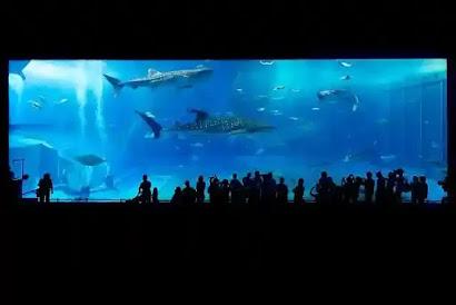 حديقة الاسماك
