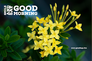Smile and say good morning beautiful small yellow flowers background image