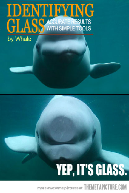 whale demonstrates