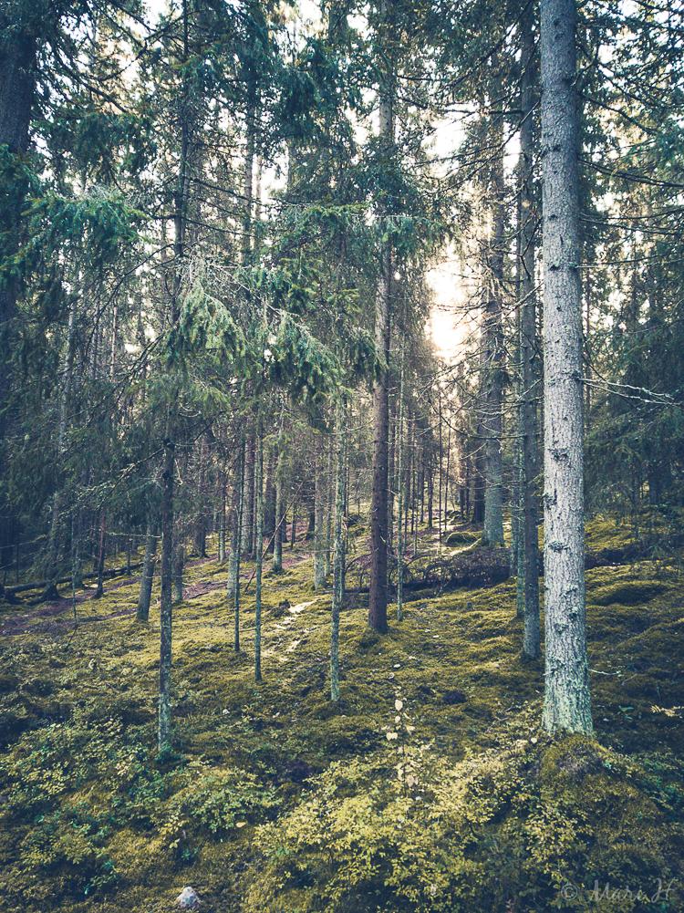 rautakautinen metsä