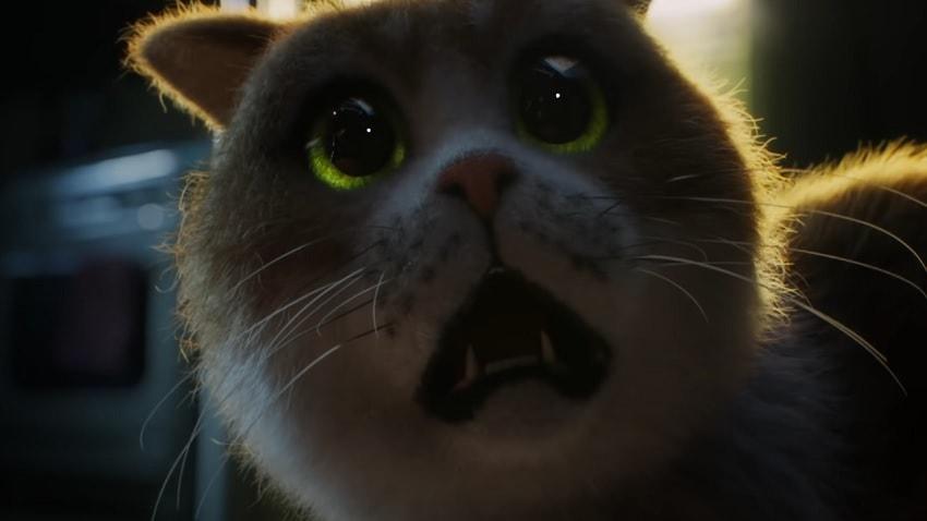 Вышел короткометражный фильм Scaredy Cat: The Movie - первый хоррор для кошек