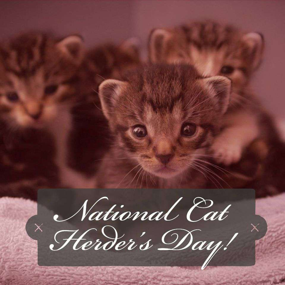 National Cat Herders Day Wishes Images download