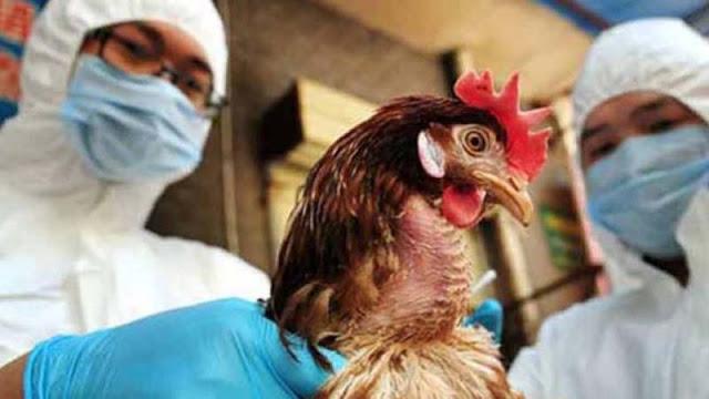SHANGÁI.- Las autoridades sanitarias chinas anunciaron hoy la detección del primer caso mundial de gripe aviar H10N3 en humanos.  En un comunicado, la Comisión Nacional de Sanidad asegura que hasta ahora nunca se había detectado un contagio a humanos de ese virus, que se trata de una transmisión «accidental» y que el riesgo de una propagación a gran escala es «muy bajo».  El paciente es un hombre de 41 años de la provincia oriental de Jiangsu que el pasado 23 de abril empezó a notar fiebre y otros síntomas, siendo hospitalizado cinco días después tras agravarse su estado.  La Comisión apunta que el estado del contagiado ha mejorado hasta el punto de alcanzar los requisitos para ser dado de alta.  Según los expertos, que reiteran que se trata de un caso aislado, el virus H10N3 no tiene la capacidad de infectar de manera efectiva a humanos.   La Comisión hizo un llamamiento a los ciudadanos a evitar el contacto con aves muertas en el día a día y a tratar de no acercarse a las vivas tampoco, así como a cuidar la higiene alimentaria y a acudir inmediatamente a un doctor en caso de presentar síntomas como fiebre o problemas respiratorios.