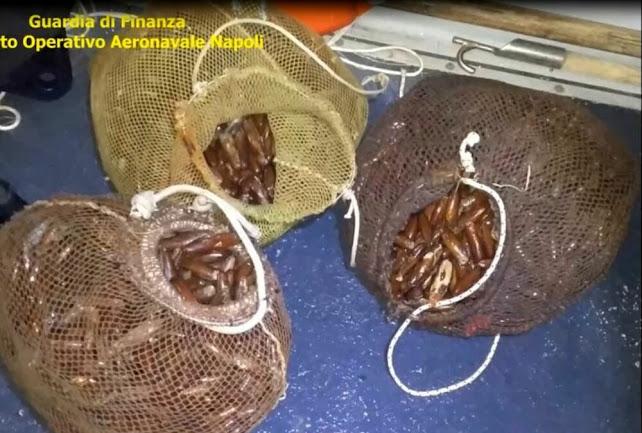 Napoli: mercato illecito di datteri di mare, 12 arresti per pesca di frodo (VIDEO)