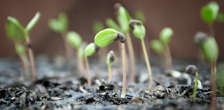 Catholic Daily Reading + Reflection (Homily) 13 June 2021 - From Little Seed To Large Tree