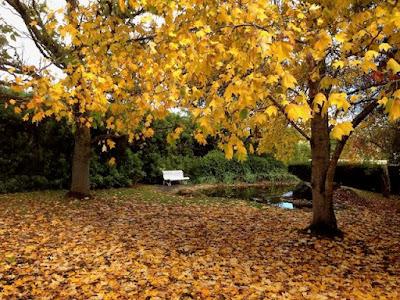 Autumn leaves at Tasma House and Gardens Daylesford