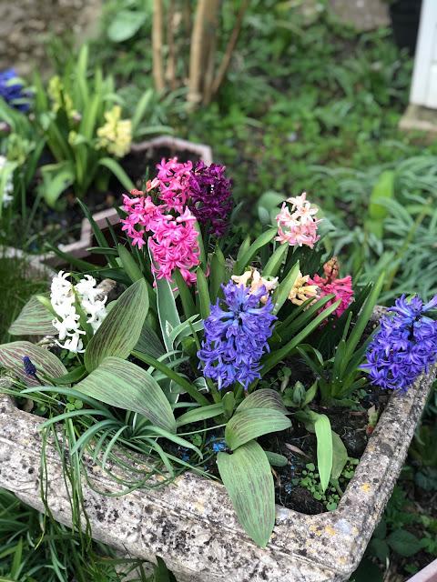 Chez Maximka, spring flowers