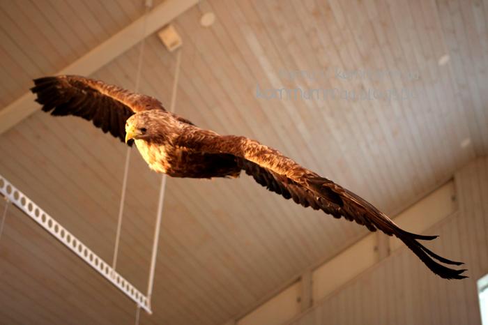 kasnäs sinisimpukka luontokeskus kotka lentää täytetty