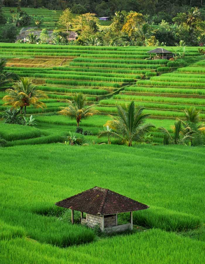 Aktivitas Wisata di Jatiluwih Bali