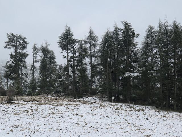Bosques de Cedros hacia Oum Er-Rbia