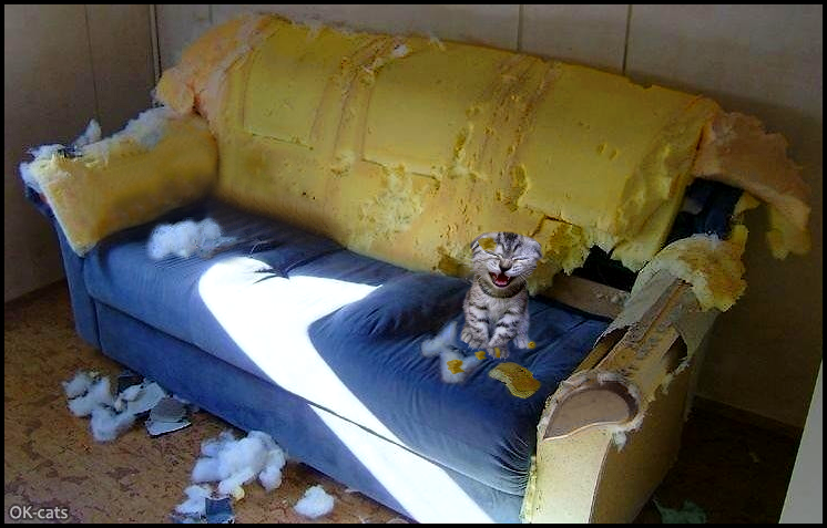 Photoshopped Cat picture • Haha, naughty kitty laughs 'cause he destroyed the blue couch with his sharp claws!