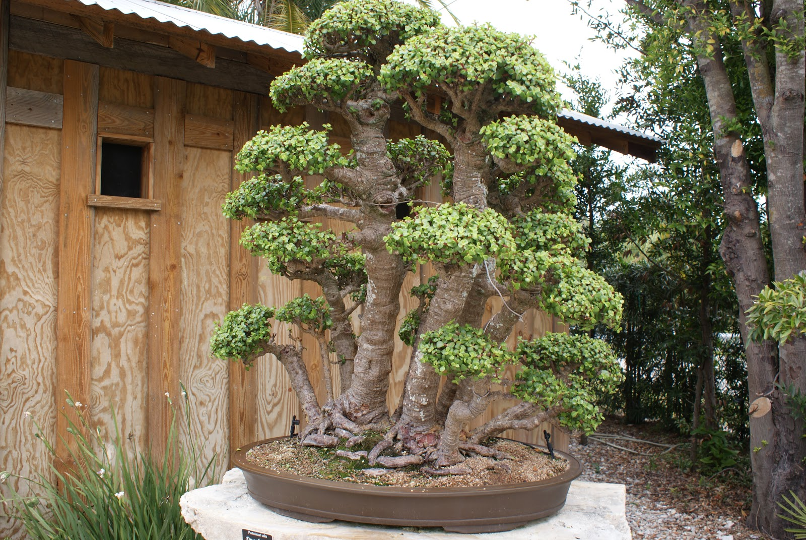 Day By Day James J Smith Bonsai Gallery