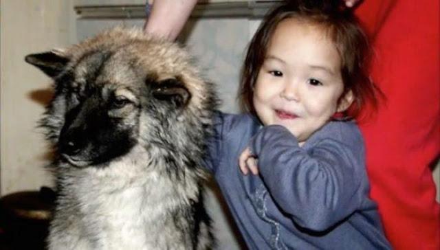 3-летняя девочка блуждала в тайге 11 дней! Волки и медведи не тронули её лишь по одной причине