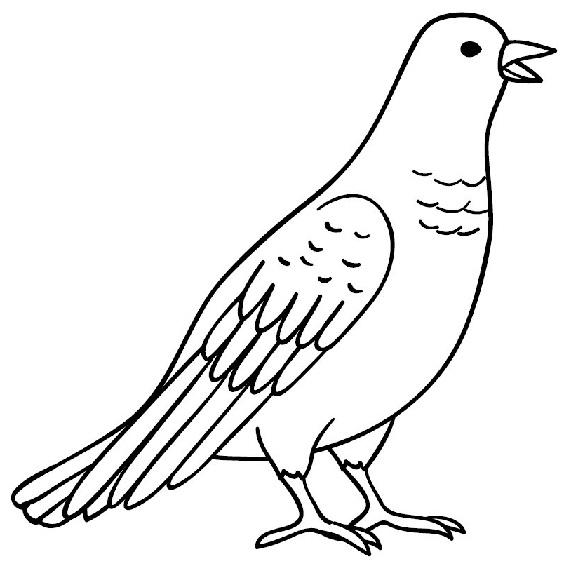 gambar burung merpati mudah digambar