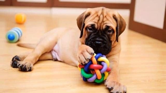 Μήπως έχετε παραμελήσει τον σκύλο σας; Πώς θα το καταλάβετε;