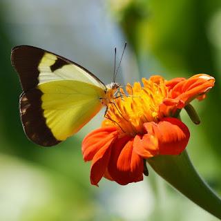mariposa for macro de cesar augusto rincon
