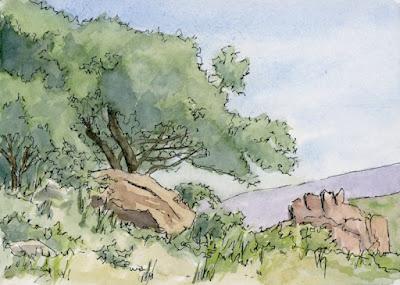 pen watercolor sketch daily scrub oak nature