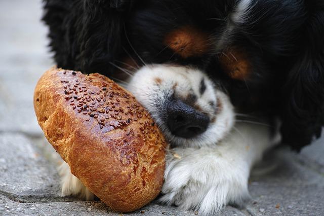 When to Quit Your Dog's Diet regimen