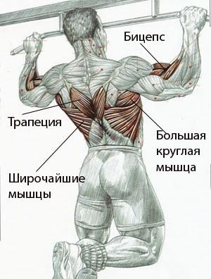 подтягивания на турнике для расширения спины