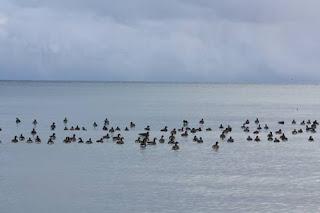 Floating Geese.