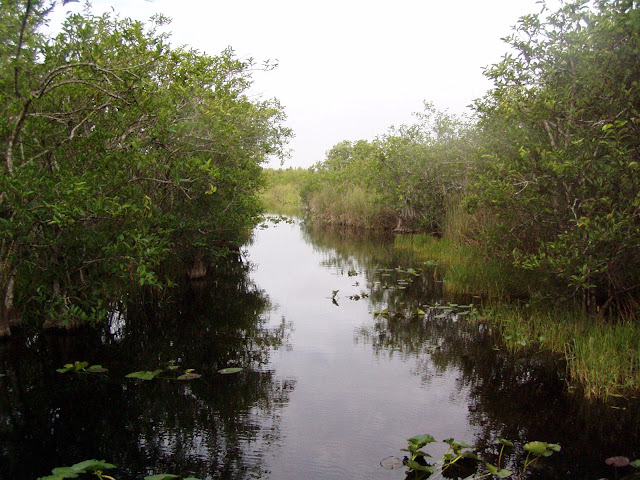 Everglades by airboat