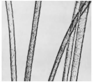 Longitudinal-View-500X-Cashmere-fibre