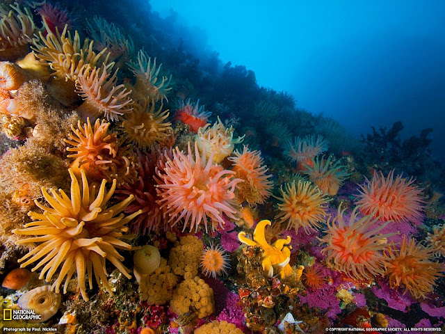 Anemones and soft corals