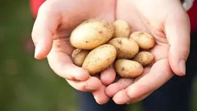 5 tips på goda rätter man kan göra med potatis / potatisrätter - nutritionsve