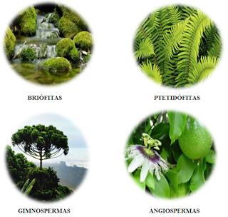 Grupos vegetais