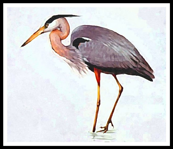 Stories for kids-(Heron and Crab)