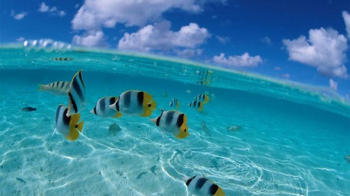 Soñar agua cristalina y peces