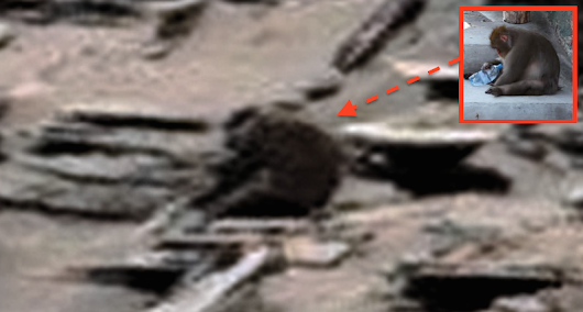 Monkey On Mars! Amazingly Weird and Strange Discovery In Rover Photo! Feb 2016, Photos, UFO Sighting News.