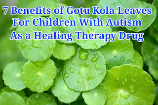 7 Benefits of Gotu Kola Leaves for Children With Autism as a Healing Therapy Drug