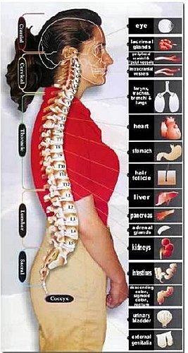 脊椎側彎, 脊椎側彎後遺症, 脊椎側彎怎麼看, 脊椎側彎會怎樣