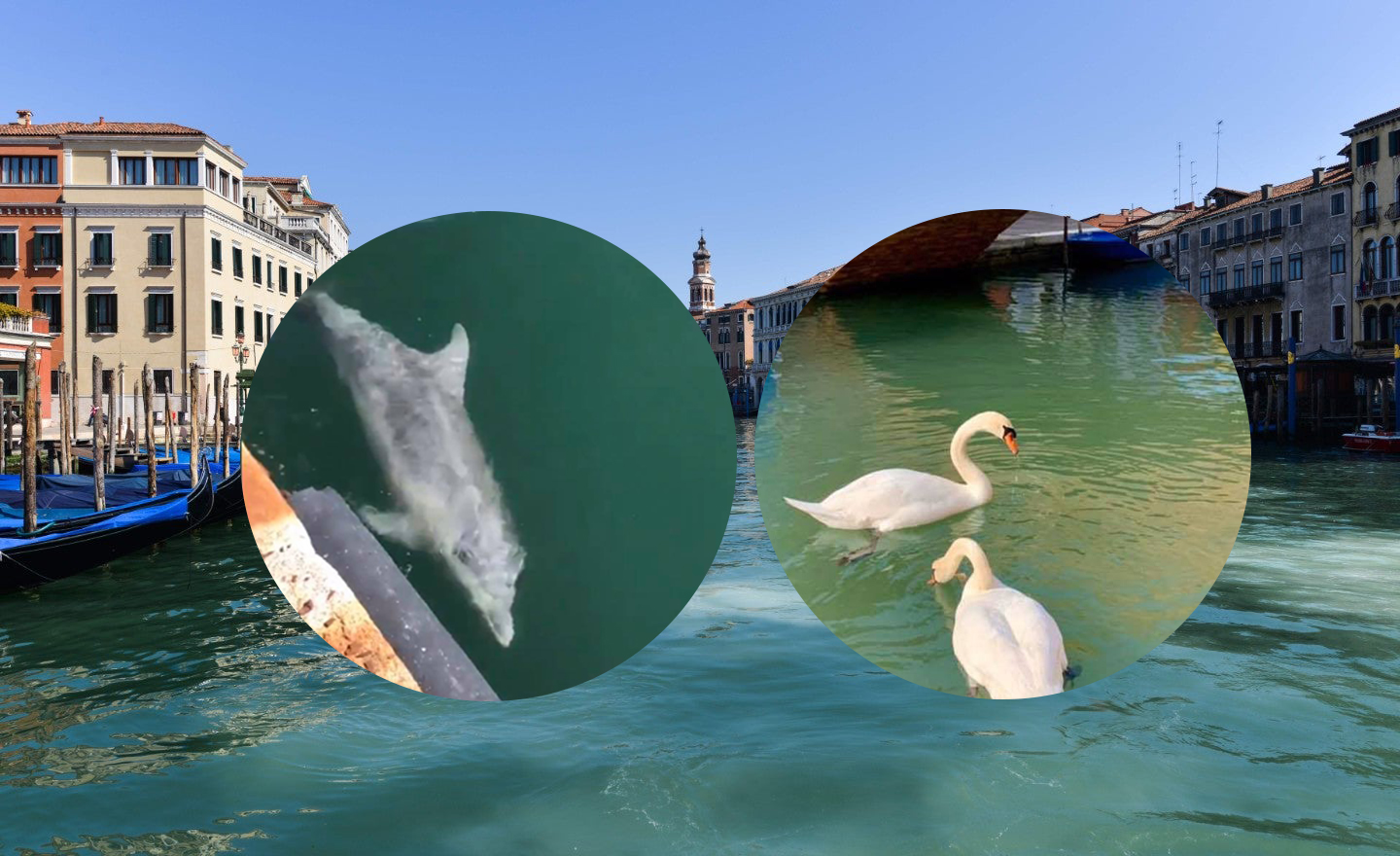 Venice Canal Dolphins and Swans