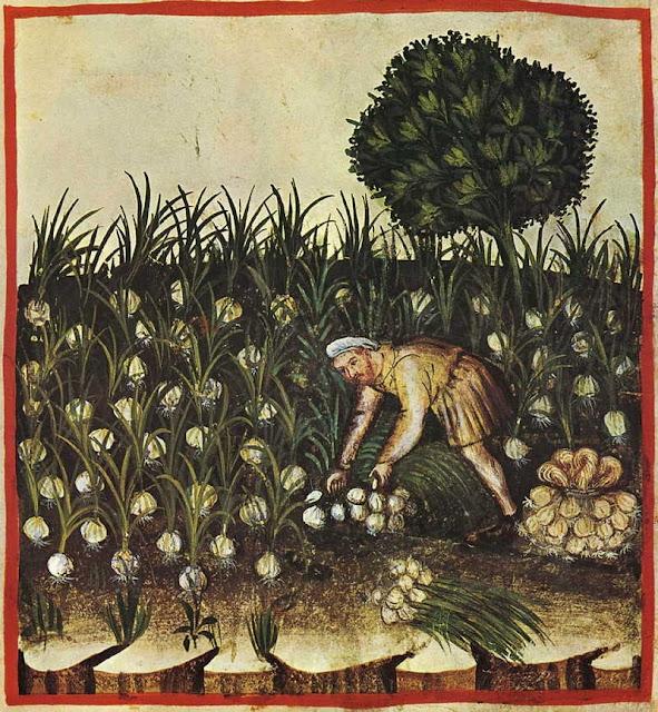 Ilustración de un hombre recogiendo ajos en un huerto procedente del manual medieval sobre salud y bienestar, basado en el Taqwin al‑sihha