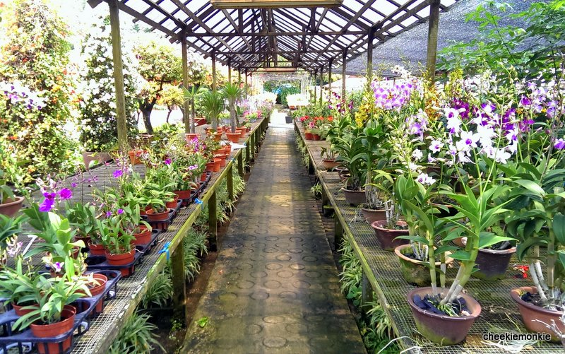 Cheekiemonkies Singapore Paing Lifestyle Blog S The Coyne Connection Plant Nursery