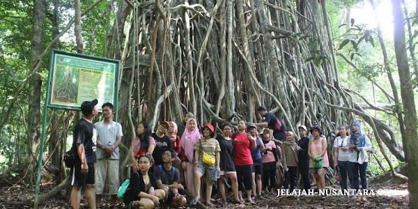 jungle trekking wisata taman nasional ujung kulon banten
