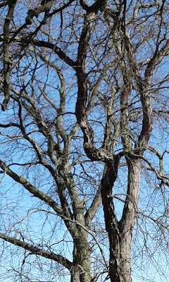 leafless tree trunks and branches