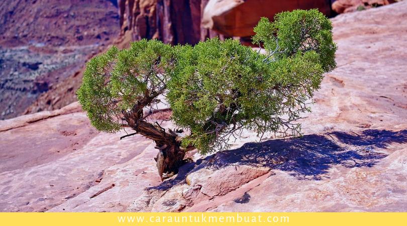 Juniper Tree on Canyonlands 10