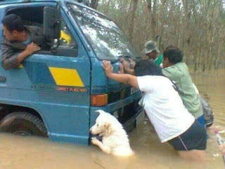 Dog Helps To Push Vehicle Suck In Flood Water.